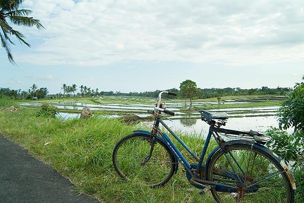 Villa Bangkuang Bali Rice Paddy's