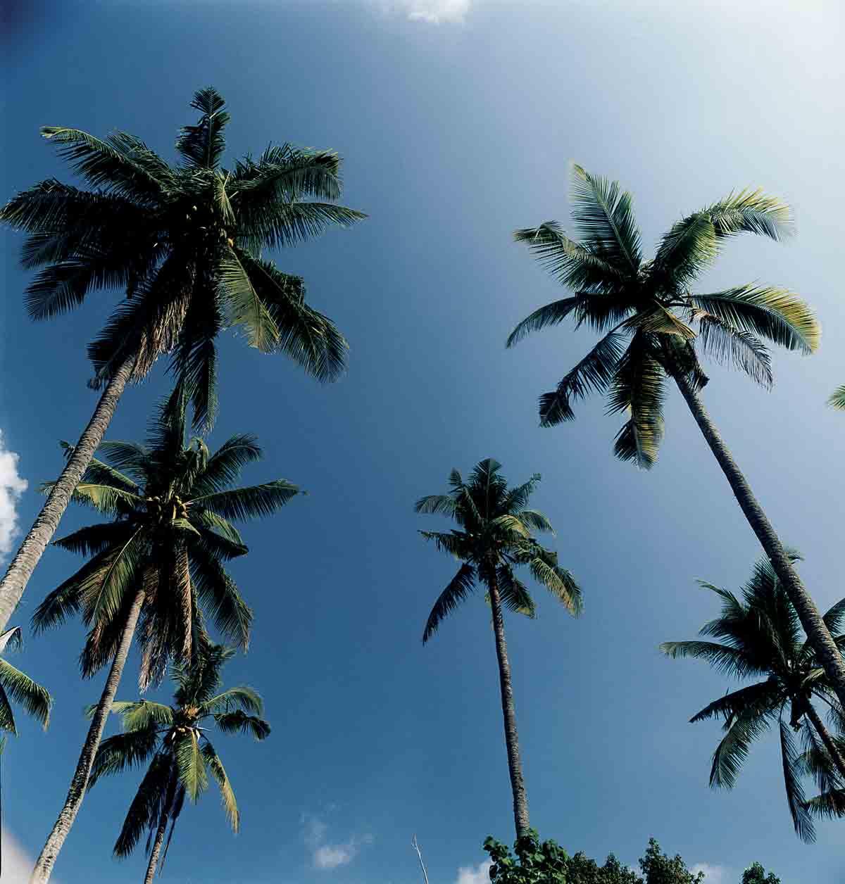 Kayumanis Jimbaran Palm Trees